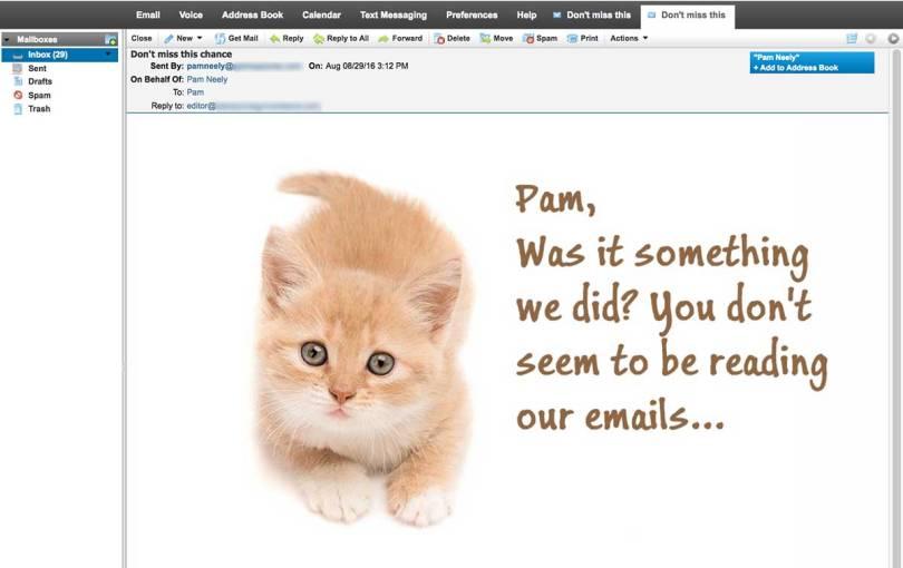 OrangeKittenInEmail.jpg